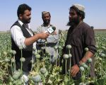 1024px-Afghan_poppies